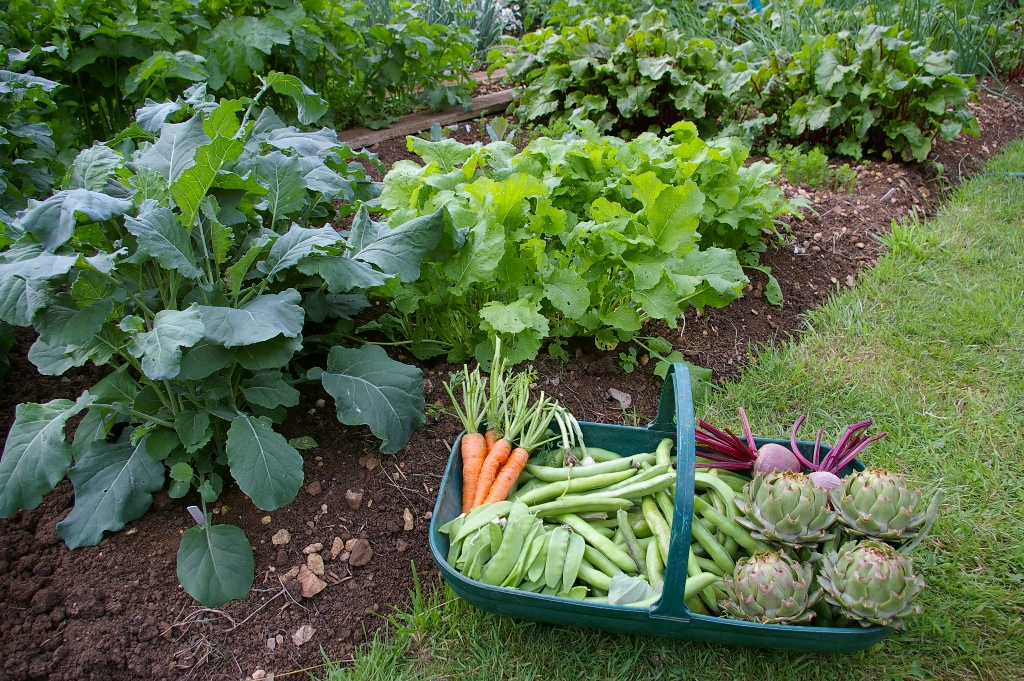 Interested in decreasing your carbon footprint through gardening?